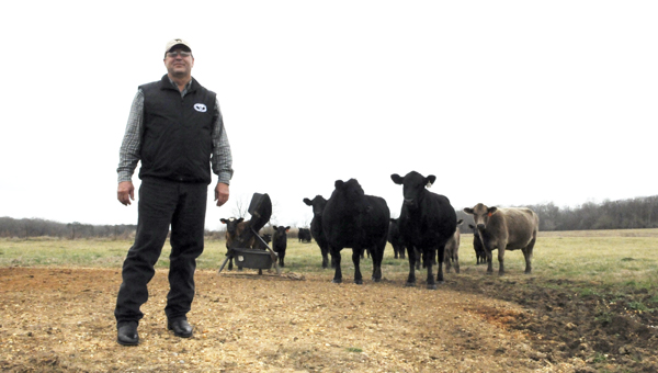 Jimmy Holliman, owner of Circle H Cattle Farm in Marion Junction, was recently named 68the president of the Alabama Cattlemen's Association. Holliman, a Mississippi native, started the farm in 1982 where he raises Black Simmental Cattle. --Sarah Cook