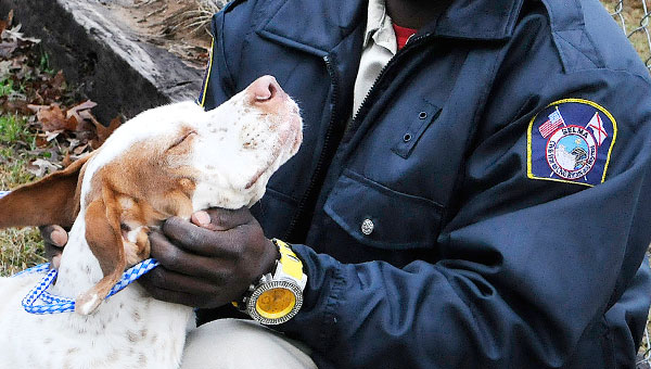Anthony Smith, a caretaker at the Selma Animal Shelter, exercises one of the many pets available for adoption at the local animal adoption agency. (Sarah Robinson   Times-Journal)