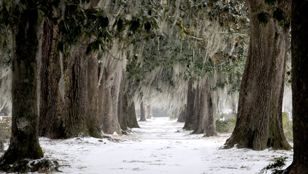 Josh Bergeron | Times-Journal Scenic landscape: Snow dusted the landscape at Live Oak Cemetery in Selma last week.  Rain, ice and snow coated the region last week in a rare snowstorm that brought an inch of snow to Dallas County. (Josh Bergeron | Times-Journal)