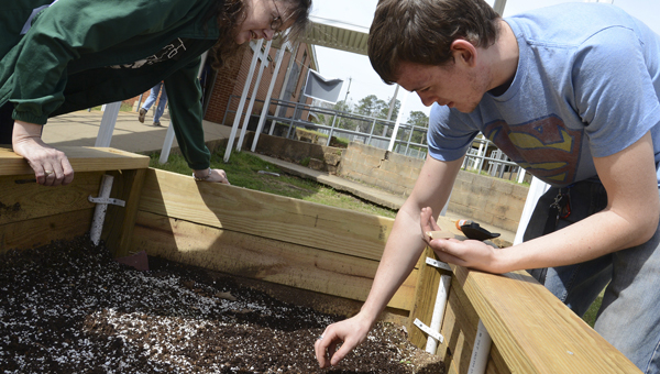 Dallas County High School environmental science teacher Catherine Johnson, left, looks on as junior Josh Broadhead plants a row of sunflower seeds in a raised garden at the school Friday morning. (Jay Sowers | Times-Journal)