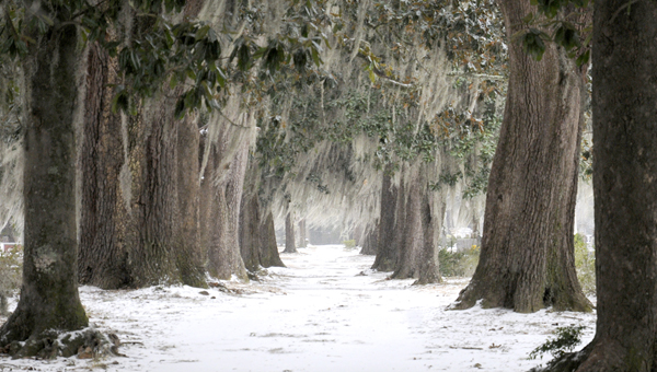 Josh Bergeron | Times-Journal winter Wonderland: Snow covered the ground in Old Live Oak Cemetery during Selma's January snow storm. Some local school systems are now finding ways to make up time missed during the storm.