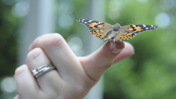 Marguerite Curry released dozens of butterflies at a memorial event.--Christopher Edmunds