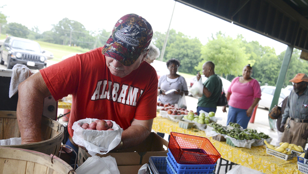 Raymond Harrison fills a carton with produce Saturday during the first day of business this year at the Selma Farmers Market.